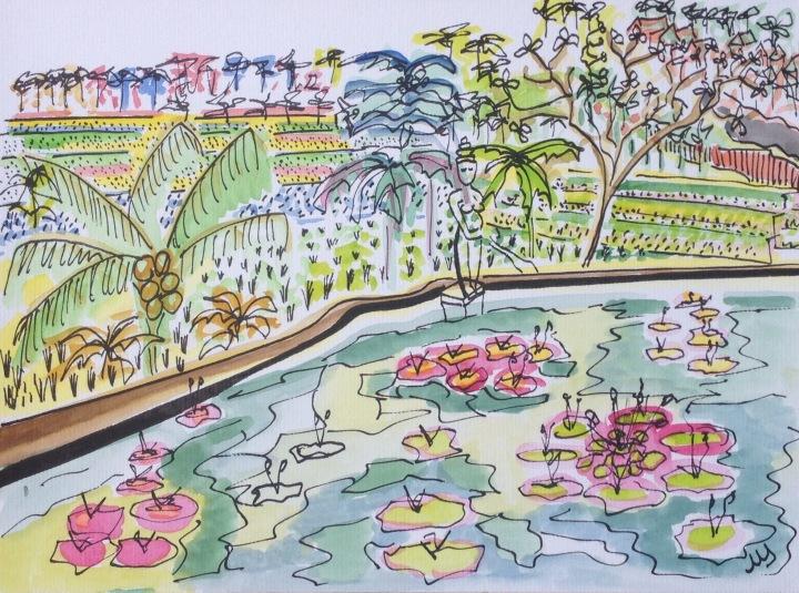 13. Nenúfares de Bali. 29.09.2014