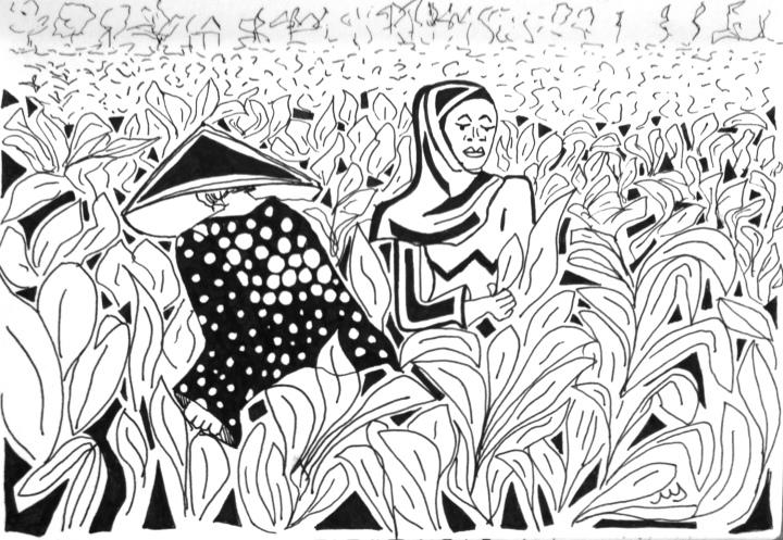 17. Mujeres recogiendo maiz. Sengigi - Lombok. 18.09.2014